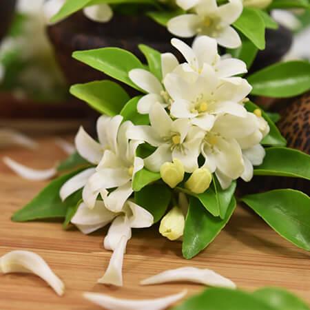 Jasmine Flavour Oil