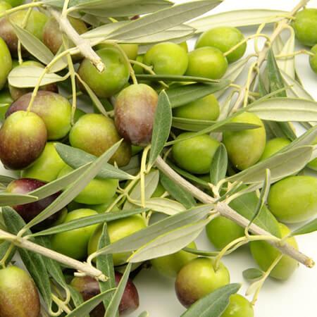 Olive Oil – Pomace