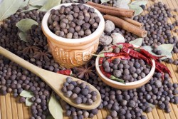 Allspice Essential Oil *