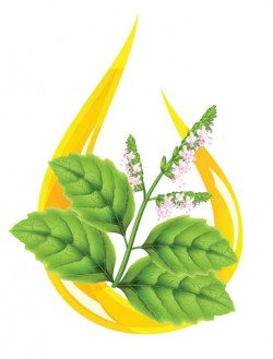 Patchouli Essential Oil *