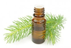 Pine Needle Scotch Essential Oil *