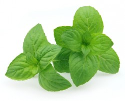 Peppermint Essential Oil *