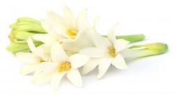 Tuberose Floral Wax