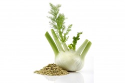 Fennel Essential Oil *