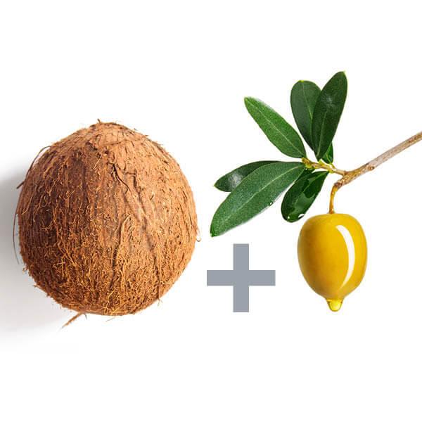 coconut_v3