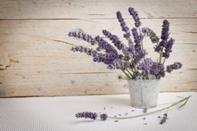 Fresh Lavender Fragrance Oil